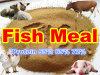 Fische Feed Powder für Animal Feed