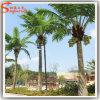 Künstliche im Freien gefälschte Kokosnuss-Palme für Dekoration
