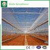 Multi-span maisons vertes en plastique pour la plantation
