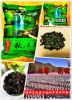Fungo/Agarics pretos secados/orelhas Fungus/de madeira Ear/Se-Enriched do judeu/fungo saudável do alimento/vegetal/Mushroom//Autumn/aurícula comestíveis do Auricularia
