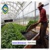 Van Venlo de Serre van het PC- Blad voor het Kweken van Komkommer