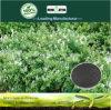 Il carbonio di fertilità di aumento di Kingeta ha basato il fertilizzante composto NPK 18-6-18