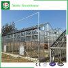 PC Blatt-Gewächshaus-Polycarbonat-Gewächshaus für Agricutural das Wachsen