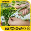 Choix du jardinier professionnel Bonsai sécateurs Bush