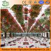 Ecological Restaurant Hoja de PC Invernadero Utilizado Greenhouse Comercial