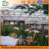 Invernadero ecológico del vidrio del restaurante Utilizado invernadero comercial