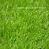 景色のプラスチック泥炭の庭の総合的な草(ように)