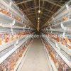 Azienda avicola Automatic Chicken Cage Feeding System per Layer