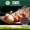 Il carbonio di alta qualità di Kingeta ha basato il fertilizzante composto NPK 18-18-6