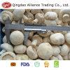 Intero fungo congelato superiore del fungo prataiolo