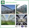 Invernadero agrícola del policarbonato con el vidrio de flotador