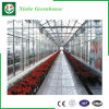 Feuille de PC/glace/serres chaudes de pipe galvanisées par film plastique pour la fraise/Rose