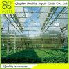 Das Multi-Überspannung Landwirtschafts-Glas-Gewächshaus