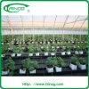 野菜栽培のための経済的なマルチSpan Film Greenhouse