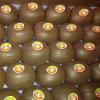 Frutta di Kiwi squisita fresca dell'esportazione (25, 27, 30, 33, 36, 39)