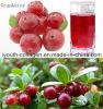 EUの品質の有機性赤いクランベリーのフルーツジュース、豊富なアントシアニン、芝地、抗癌性、Anti-Aging、抗菌性、胃の蟹座の防止、レバーおよび痴呆、
