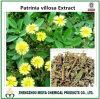 Extrato natural do pó da erva de Dahurian Patinia da origem de China