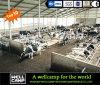 Establo de la granja avícola de Wellcamp/casa de la vaca