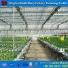 Большой размер коммерческих гидропоники PC лист выбросов парниковых газов для помидора