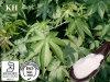 Süsser Tee-Auszug: Rubusoside 75% durch HPLC