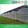 Blumen-/Frucht-/Gemüse-Zucht-Plastikfilm-Gewächshaus mit Sonnenschutz-System