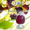 Extrait naturel de graines de raisin OPC 95%