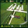 Ферма цыпленка Lingshan в Алжир