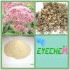 Lycoposes 80% Lupeose 80% 10:1 van het 4:1 van het Uittreksel Bugleweed van de Stachyose het Harige