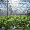 Invernadero de la hoja de la PC del Multi-Palmo para la cultivación hidropónica