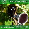 Порошок сока черной смородины 100% естественный (Anthocyanin/Anthocyanidins 25%, 35%)