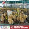 Установка бройлерных клеток с кормления птицы (A-3L90)