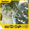 Мешок корзины телескопичного подборщика плодоовощ безопасный с сжатием ручки 2.4m легким