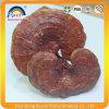 Всей высушенный частью гриб Ganoderma Lucidum