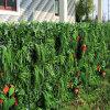 Il giardino protegge la barriera artificiale di alta qualità della pianta dell'EDERA