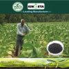 Le Carbone De Kingeta un Basé L'engrais Organique versa il DES Fleurs