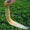 Jungfrau-blonde Farbe spitze ich Menschenhaar-Extension