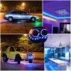 Indicatore luminoso di striscia flessibile di alta qualità SMD 5050 RGBW LED 5m con il Ce RoHS dell'UL TUV impermeabile