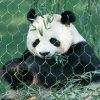 動物園動物のための2017ステンレス鋼ワイヤーロープの網