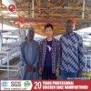 잠비아 /Ghana 농장에 있는 15000마리의 농장 대규모 가금 새장