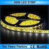 Illuminazione di striscia flessibile della decorazione 12V SMD 5050 LED