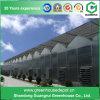 Serre chaude en aluminium de feuille de PC de profil d'acier inoxydable d'agriculture pour le fruit