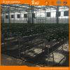 Agribusiness를 위한 네덜란드 Technology 다중 Span Glass Greenhouse