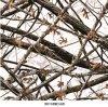 La transferencia del agua del árbol de Camo filma la hoja verdadera de B074kmc56b Hydrographics