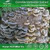 Poudre d'extrait de Coriolus versicolor de qualité (polysaccharides 10%~50%)