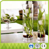 La decoración del hogar de altura del cilindro de vidrio jarrones de flores en florero de vidrio de forma