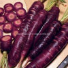 Pigmento de la zanahoria del negro del aditivo alimenticio
