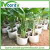Hidropónico crecer la cultivación del bolso para el pepino