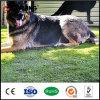 Hierba barata del animal doméstico del césped de la alfombra del perro del precio