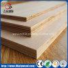madera contrachapada comercial de la base del eucalipto del álamo del gradiente marina de 18m m