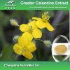 Выдержка большого Celandine 100% естественная (10%~90% Chelidonine)